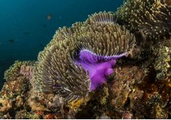 Benguerra reef diving