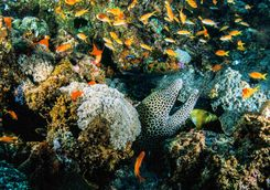 moray eel africa diving