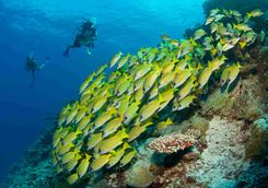 Diving Six Senses Laamu Maldives