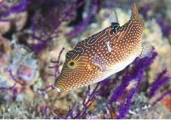 marine life salalah