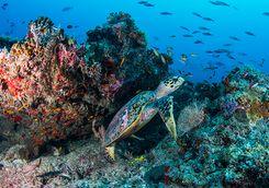 diving alphonse