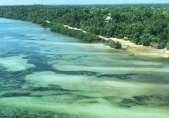 mafia island overcoral reef