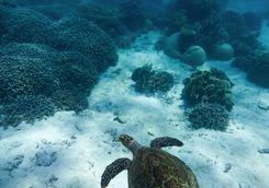 turtle tanzania