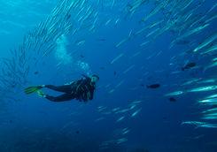 palau micronesia diver