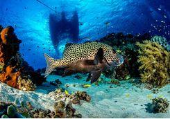 fish and coral at honolua bay