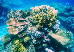 coral reef somosomo strait