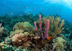 greneda coral reef