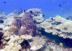 el nido coral