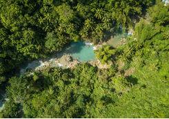 jungle overhead