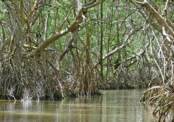 celestun mangroves