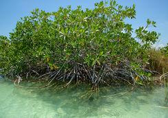 sian mangroves