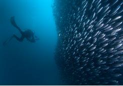crowded fish
