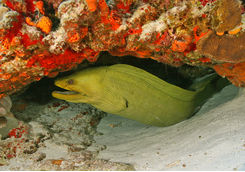 moray eel coxumel mexico