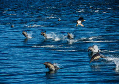 group dolphins