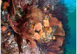 coral reef colourful