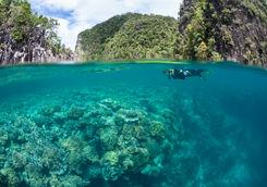 snorkelling raja ampat