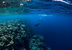 freediving maldives