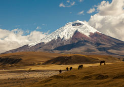 cotopaxi volcano with wild horses