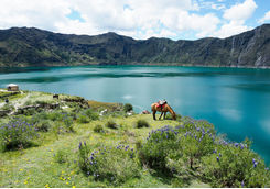 quilotoa lagoon and horse