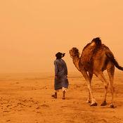 Camel in sandstorm