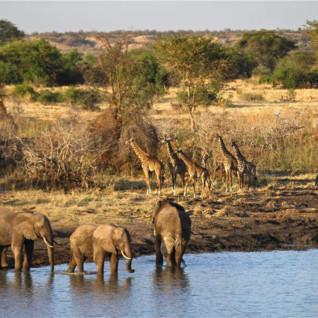 Wildlife at Manyara Ranch, luxury ranch in Tanzania