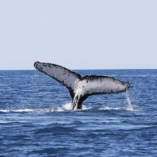 Whale Watching in Madagascar