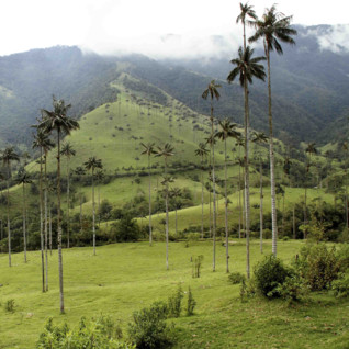 Misty Day in Cocora
