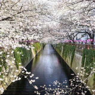 Honshu