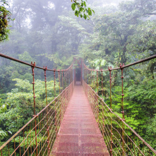 Volcanoes and Cloud Forests