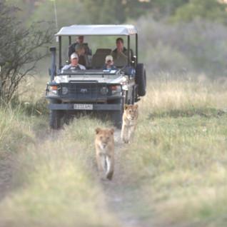Safari Hotels