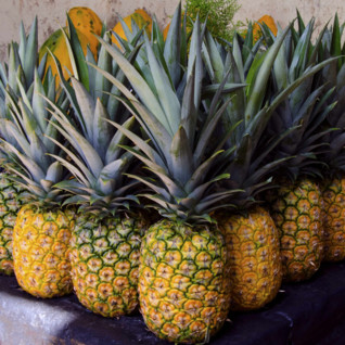 Pineapples Nicaragua