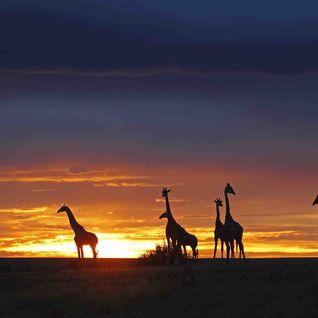 Africa Nature Reserve