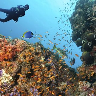 scuba diving in coral reefs