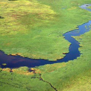 a luscious river scene