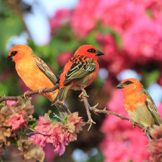 Colourful birds in the Seychelles