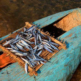 Lake Malawi fresh fish