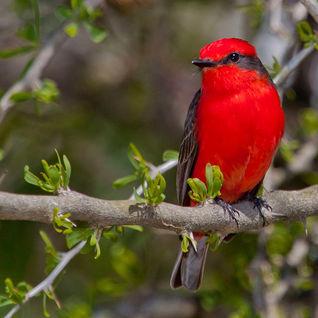 Bird in Sao Tome