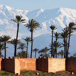 Atlas Mountains palms