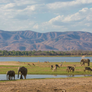 Elephants near the Zambezi River