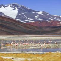 Lake with Flamingoes