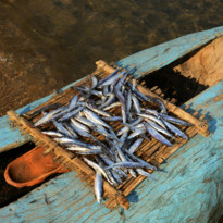 Catch of the Day on Lake Malawi