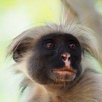 monkey close up