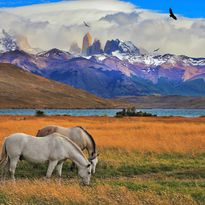 Horses in the Andes, Chile