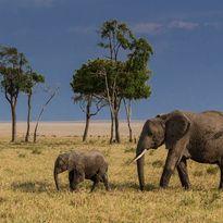 Elephants in the Selous