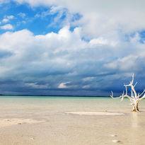 Lone tree on beach, Anguilla