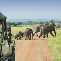 Elephants in a safari in Kenya