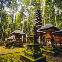 indonesia forest sanctuary