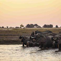 Elephants in Okavango, Botswana