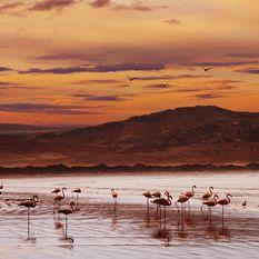 Flamingoes at sunset, Namibia