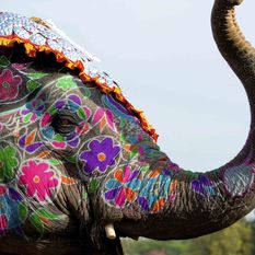 A colourfully decorated elephant, Rajasthan
